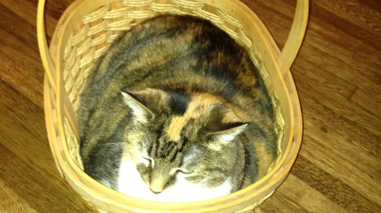 Remembering Athena the Cat
